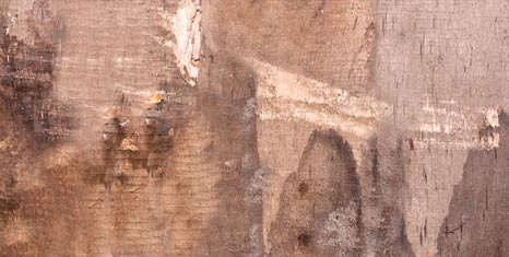 Dry Rot Treatment Torbay