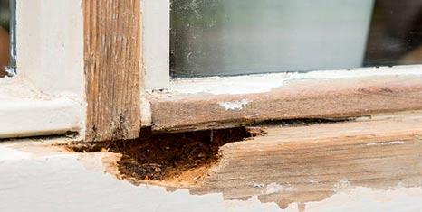 woodworm treatment devon